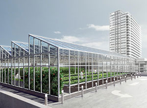 Rendering of Sky Harvest's future rooftop greenhouse. Image provided by Aaron Quesnal