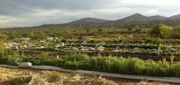 Four Young Farmers Grow Thriving Sustainable Operation in Southern Arizona
