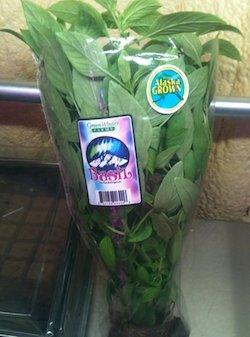 basil from green winter farm