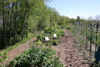 community orchard of west seattle