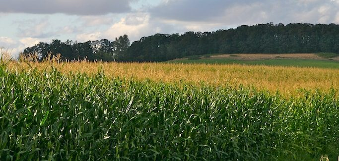 The New Mandatory GMO Labeling Law – What Does it Mean for Farmers and Consumers?