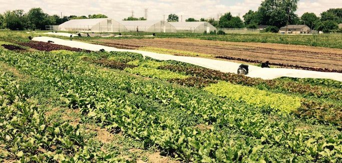 Two Urban Farms in Ohio Offer Hope and Food Access to Community in Need