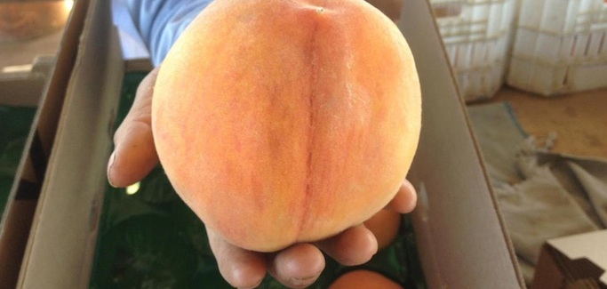 Peaches, People and the Power of the Pen: Masumoto Family Farm, Central Valley, CA