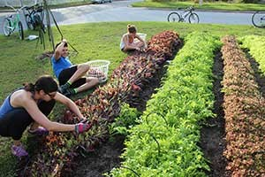 Fleet Farming in Orlando utilizes volunteers on bikes to harvest produce from participating home sites. Not only does its work spur local agriculture in the region, but it also builds community. (photo courtesy Heather Grove/Fleet Farming)