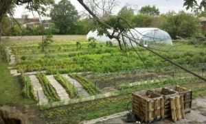 Food Field is a for profit 4-acre urban farm based in Detroit that was founded in 2010 by Noah Link and Alex Bryan. Photo Credit: Food Field.