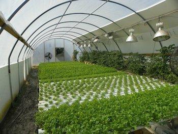 Photo Credit: Good Life Farms.
