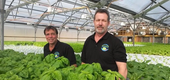 Vermont Hydroponic Venture Emerges Out of Barroom Conversation, and a Desire to Grow Year-round