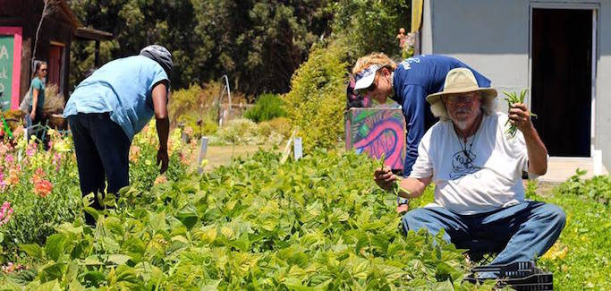 For Homeless in Santa Cruz, CA, Garden Project Offers Hope, Stability, and Jobs
