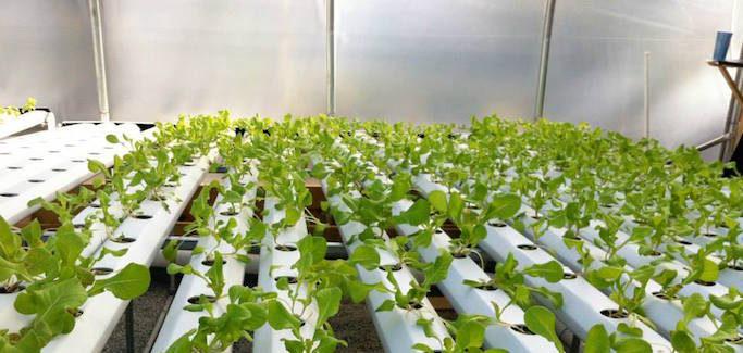 A Hydroponic Urban Farming Family Affair