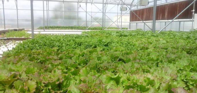 Arizona Urban Farming Startup Embraces Aquaponics to Increase Access to Healthy Food
