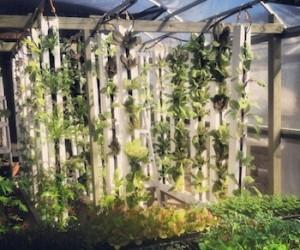 mike-lott-urban-food-works-green-wall-urban-farm