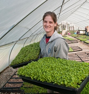 Harvest is in full swing at Manakintowne Specialty Growers in Virginia, where Jo Pendergraph and her family raise specialty produce for a local food hub. A recently-released National Food Hub Survey shows optimism about the future viability of food hubs. (USDA photo)