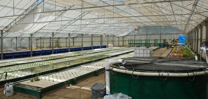 California Aquaponic Operation Seeks to Play Role in Evolution of Farming
