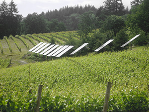 These solar panels in an Oregon vineyard are just one example of many aspects of sustainability. The Leonardo Academy is working hard on a National Sustainable Agriculture Standard, meant to serve as a reliable measuring stick for sustainability. (Wikimedia Commons photo)