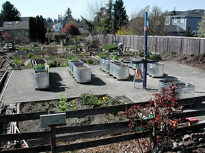 Ballard Garden was found in 1979 and is the oldest working P-Patch garden Courtesy of Seattle Department of Neighborhoods