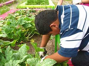 Harvesting squash. Photo courtesy of Shannon Spurlock.