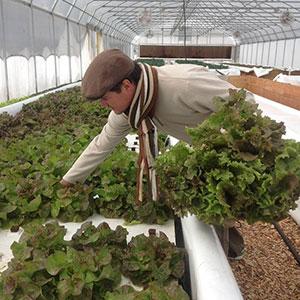 Jack Waite harvests at Aqua Dulce Farms.  Photo courtesy of Aqua Dulce Farms.
