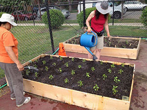 Peterson Grow to Give beds: Five percent of food produced on each of the community gardens is given to area organizations for distribution. Images courtesy of Peterson Garden Project