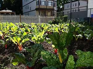 Photo credit: ReVision Urban Farm