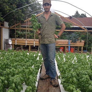 Michael Hanan harvests aquaponic basil at Ten Acre Organics. Photo courtesy of Ten Acre Organics.