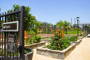 Photo courtesy of Farmscape Gardens