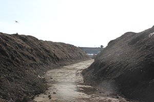 Green waste compost piles up at a compost facility in Oxnard, north of Los Angeles. (photo courtesy of David Crohn)