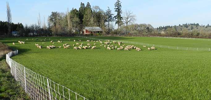 California Real Estate Company Creates Organic Farmland With Unique Business Model