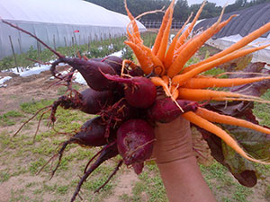 Coole Beans Farms' carrots and beats. Photo courtesy of Dixie Blades