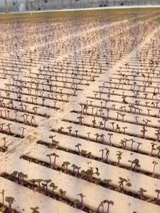 Bright Farms Courtesy of Bright Farms