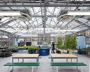 An inside shot of one of the Greenhouse Initiative Projects. Credit: Ari Burling