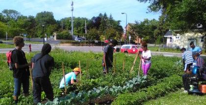project sweetie pie minnesota urban farming photo credit project sweetie pie