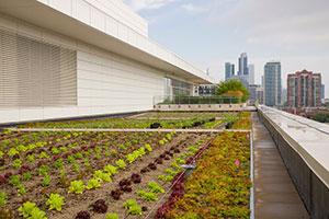 Chicago Botanic Garden's McCormick Place West Rooftop Garden