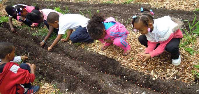 Chicago Urban Farming Partnership Focuses on Empowering South Side Neighborhood