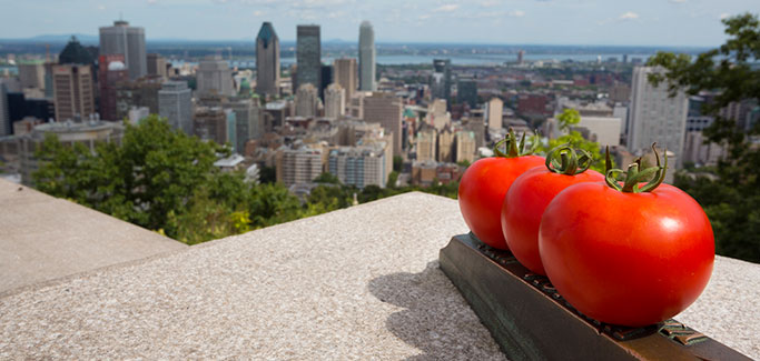 11 Urban Rooftop Farms Feeding America from Above