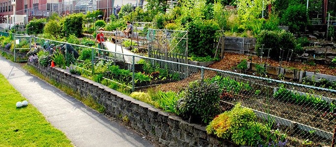 City of Portland Continues Long History of Sustainable Urban Farming