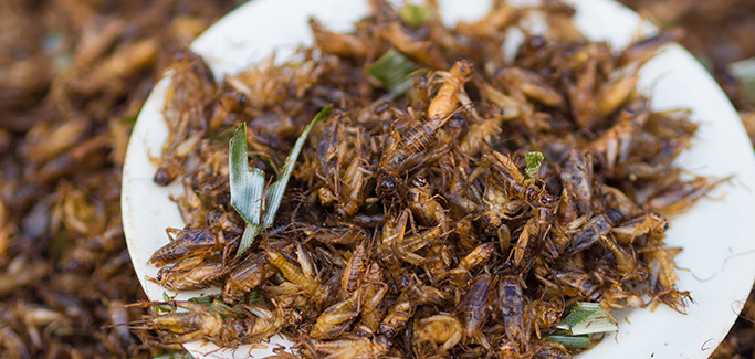 Bugs for Dinner:  Big Cricket Farms Find Niche in Edible Insect Farming