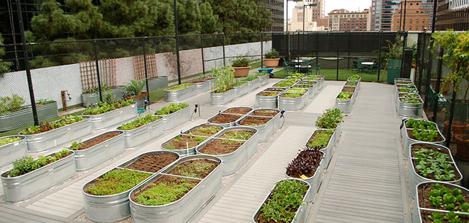 California's Largest Urban Farming Venture Finds Opportunity in Demand for Local Food