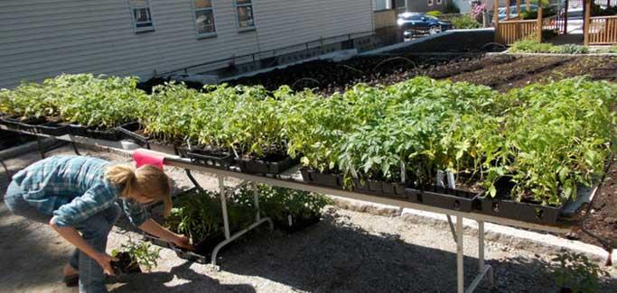 Boston Nonprofit Farm Grows Fresh Food for Homeless Families