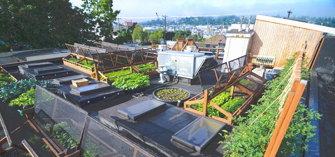 Seattle Urban Farm Design Firm Helps City Dwellers Grow Food