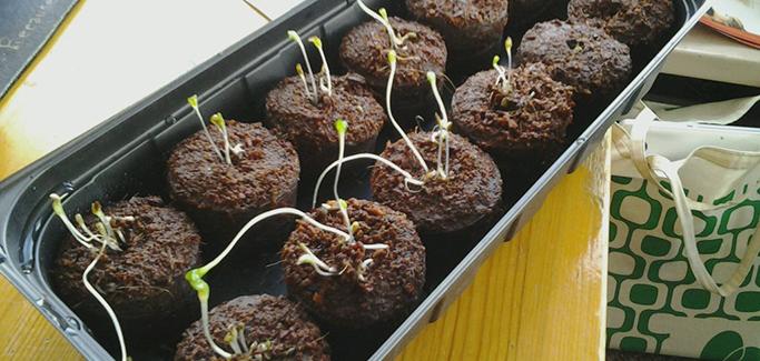 Sustainable Food Toolkit Targets Next Generation of Community Food Advocates