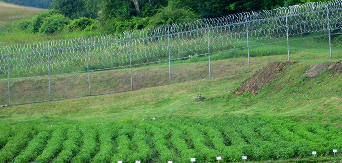 Six U.S. Correctional Facilities With 'Farm to Prison' Local Food Sourcing Programs