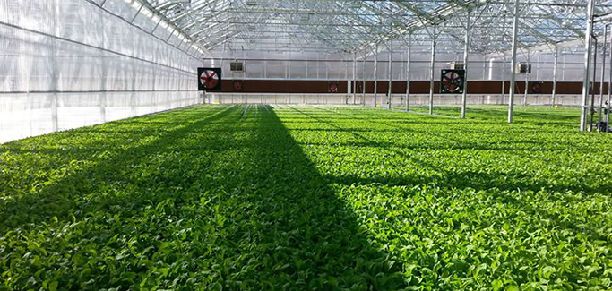 5 Farms Pushing the Boundaries of Indoor Agriculture