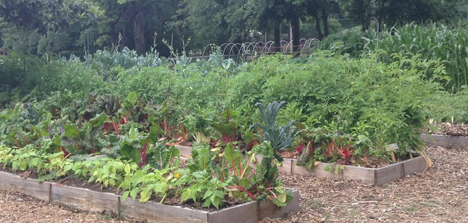 Frenchtown's Facelift: Tallahassee Urban Youth Farm Flourishes