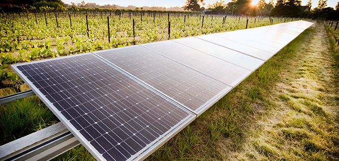 California's 'Zinfandel Capital' Embraces Third Party Viniculture Sustainability Certification