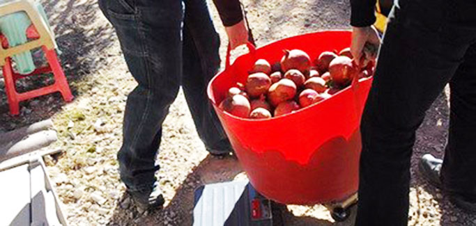 Las Vegas Volunteers Seize Opportunity to Reduce Yard Waste and Feed the Hungry