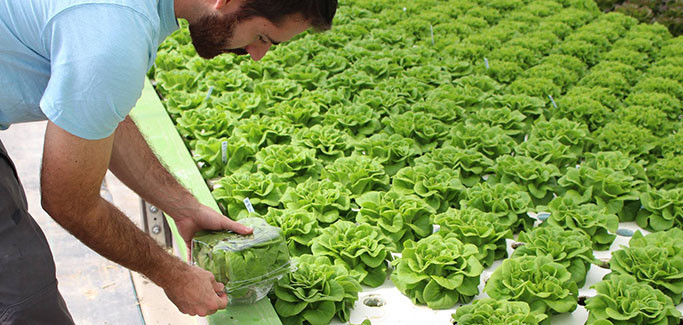 Solutions Farms Combats Family Homelessness with Aquaponics Training in Vista, CA
