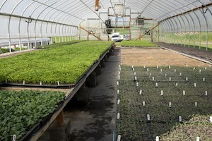 Spiral Path Farm greenhouse. Photo Credit: Missy Smith.