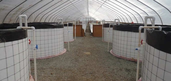 Organic Aquaponic Farm Embraces Environmental and Economic Sustainability in Oregon's Evans Valley