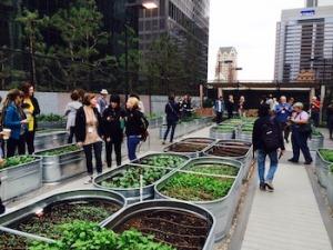 urban farm photo