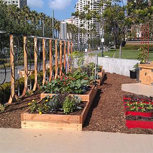 Corporate Garden in San Diego. Courtesy of Urban Plantations